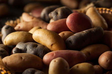 fingerling: Raw Organic Fingerling Potatoes in a Basket