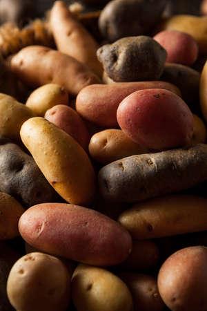 fingerling: Raw Organic Fingerling Potatoes