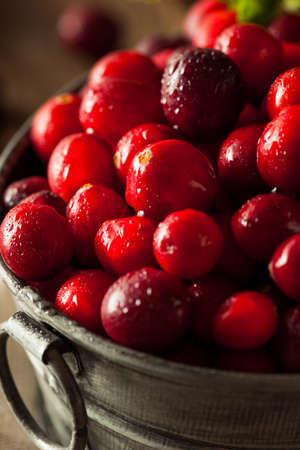 Raw Organic Red Cranberries in a Bowl 版權商用圖片