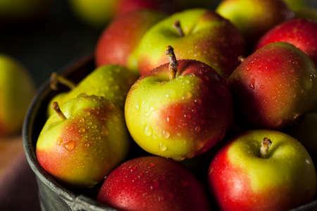 manzana: Raw Lady Org�nica Manzanas para los d�as de fiesta Foto de archivo