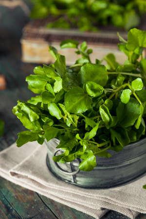 water cress: Raw Organic Green Watercress Ready to Use Stock Photo