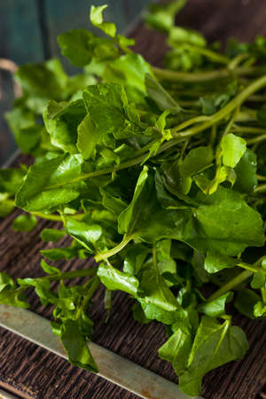 water cress: Raw Organic Green Watercress Ready to Use Stock Photo