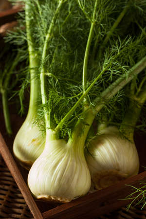 Raw Organic Fennel Bulbs Ready to Cook Stok Fotoğraf