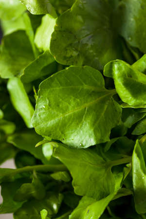 Raw Organic Green Watercress Ready to Use 版權商用圖片
