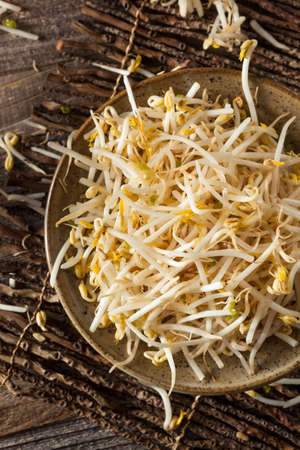 mung bean sprout: Raw Healthy White Bean Sprouts Ready for Cooking Stock Photo