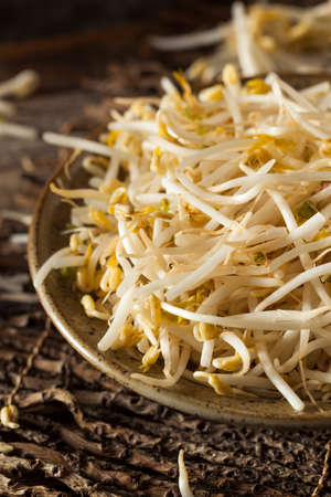 beansprouts: Raw Healthy White Bean Sprouts Ready for Cooking Stock Photo