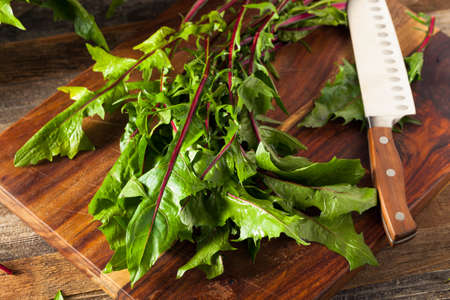 Raw Organic Red Dandelion Greens Ready to Chop Stock Photo