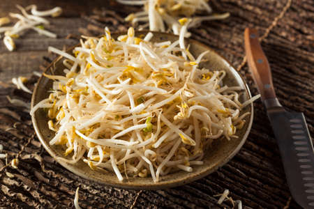 soja: Raw Healthy White Bean Sprouts Ready for Cooking Stock Photo