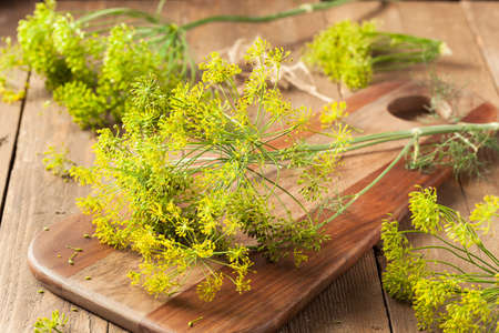 pickling: Raw Organic Pickling Dill Ready to Use
