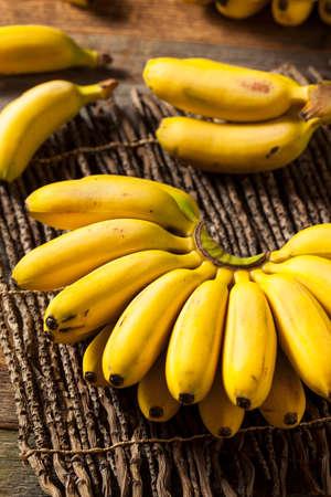 mini: Raw Organic Yellow Baby Bananas in a Bunch Stock Photo