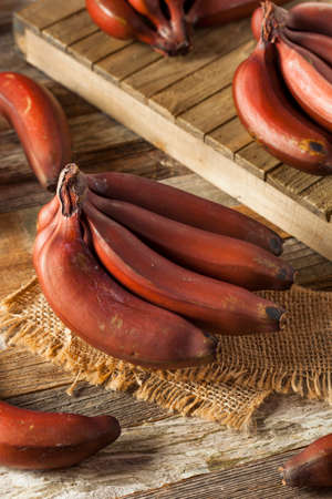 jamaican food: Raw Organic Red Bananas in a Bunch