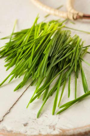 cut grass: Healthy Raw Green Wheat Grass Freshly Cut Stock Photo
