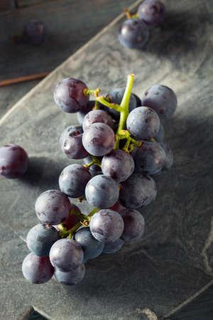 concord grape: Raw Organic Purple Concord Grapes Ready for Cooking Stock Photo