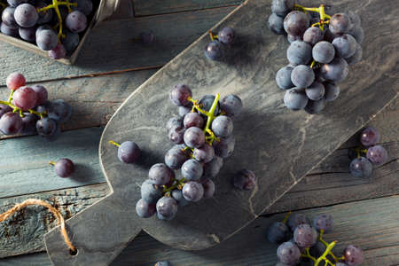 concord grape: Raw Organic Purple Concord Grapes Ready for Cooking Stock Photo