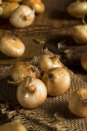 cebollas: Raw Organic Cipollini Onions Ready for Cooking Foto de archivo