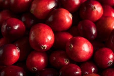 Raw Organic Red Cranberries in a Bowl Banco de Imagens