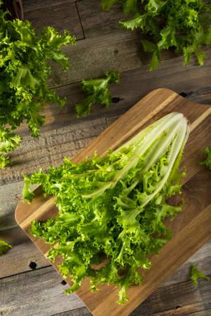endive: Raw Green Organic Endive Ready to Eat Stock Photo