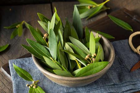 Verse Organische Green Bay Bladeren in een Bowl