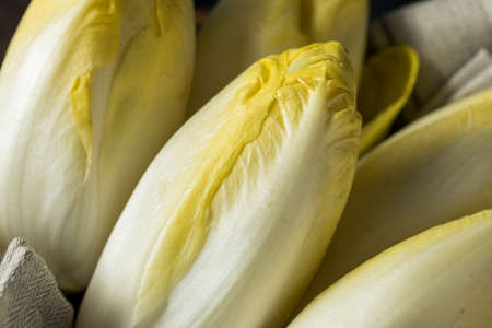 endivia: Crudo Orgánico Belga endibia Listo para comer Foto de archivo