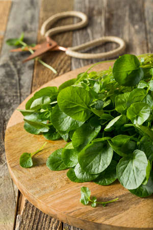 Raw Green Organic Living Water Cress Ready to Eat