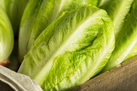 Rauwe groene biologische Romaine sla Klaar om te eten Stockfoto
