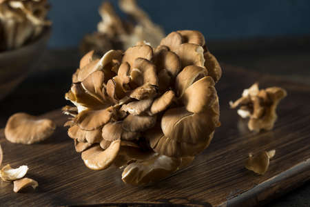 Raw Organic Maitake Mushrooms in a Bunch
