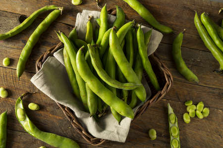 green bean: Raw Organic Fresh Green Fava Beans REady to Cook With