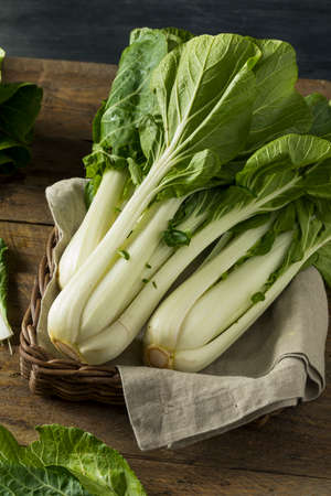 bok choy: Raw Green Organic Bok Choy Healthy Fresh Vegetable