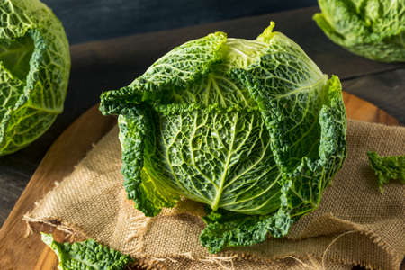 savoy cabbage: Raw Organic Savoy Cabbage Head Ready For Cooking