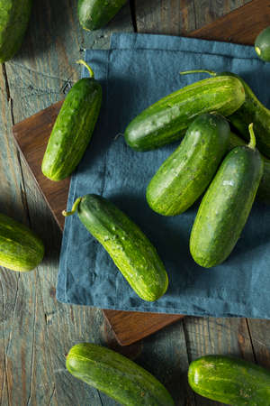 pickling: Raw Green Organic PIckle Cucumbers Ready to Eat