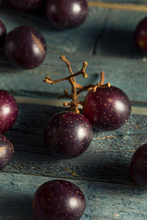 tannins: Homemade Sweet Muscadine Grapes in a Bowl Stock Photo
