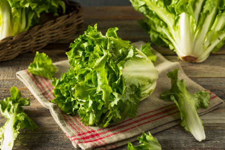 Raw Green Organic Escarole Lettuce Ready to Chop