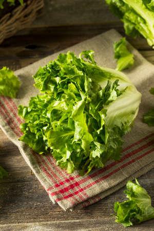 Raw Green Organic Escarole Lettuce Ready to Chop