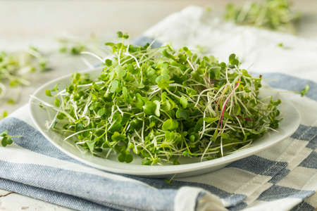 Healthy Raw Organic Microgreens Ready to Use
