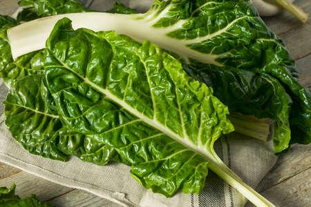 Raw Organic Green Swiss Chard Ready to Cook 스톡 콘텐츠