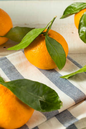 Healthy Raw Organic Satsuma Mandarin Oranges with Green Leaves