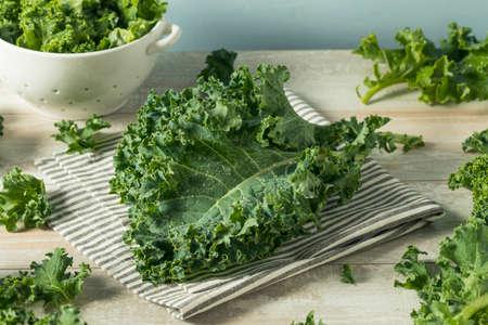 원시 녹색 유기 곱슬 케일 그릇에