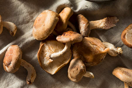 Healthy Organic Fresh Shiitake Mushrooms Ready to Cook