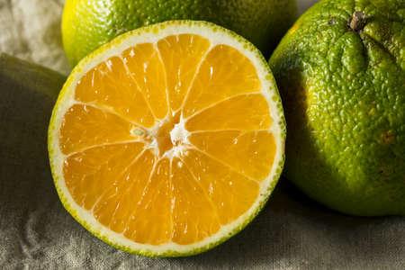 익지 않는 녹색 유기 Ugli 과일 먹게 준비되어있는 스톡 콘텐츠