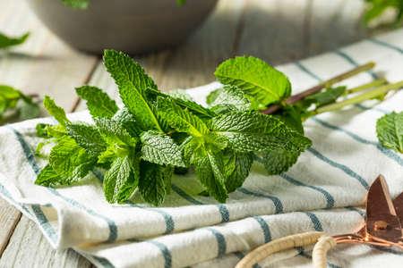 Raw Green Organic Fresh Mint Leaves in a Bunch