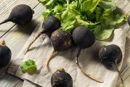 Organic Raw Black Radishes in a Bunch