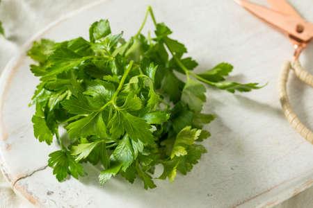 Raw Green Organic Italian Flat Leaf Parsley in a Bowl