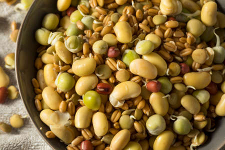 Assorted Raw Sprouted Beans Legumes in a Bowl
