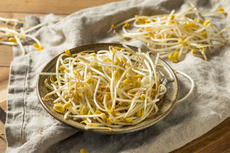 Raw Organic Soy Bean Sprouts in a Bowl
