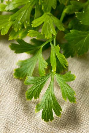 Organic Flat Leaf Italian Parsley in a Bunch Imagens