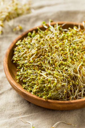 Raw Green Organic Clover Alfalfa Sprouts for Health
