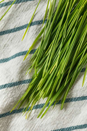 Raw Green Organic Wheat Grass for Smoothies Imagens