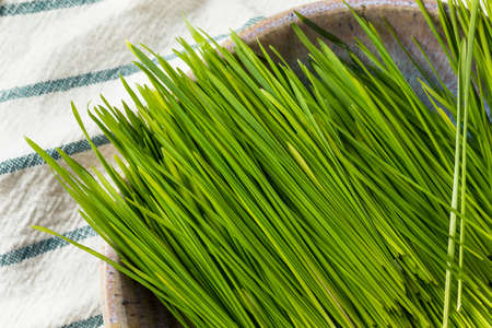 Raw Green Organic Wheat Grass for Smoothies Reklamní fotografie