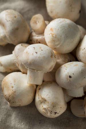Raw Organic White Button Mushrooms in a Bunch