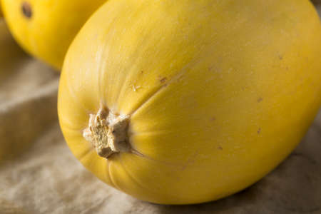 Raw Organic Yellow Spaghetti Winter Squash Ready to Cook